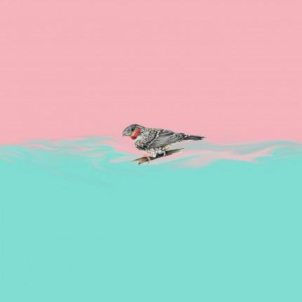 cln - owls_artwork
